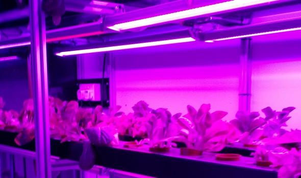 indoor hydroponics